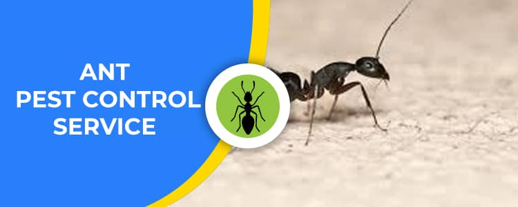 Ant Control Braddon