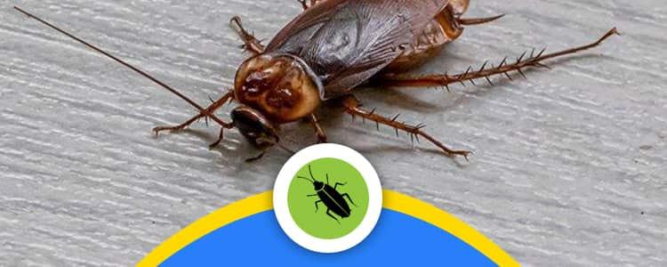 Cockroach Control Braddon